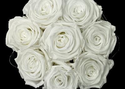 Velours White S2{{1576715642556}}