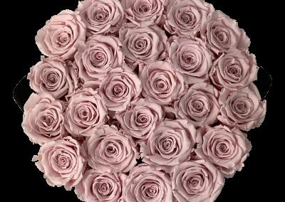 Velvet Pink L2